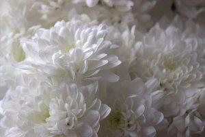 Light to dark little petal