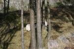 inchquin kenmare the vee feb2110 115